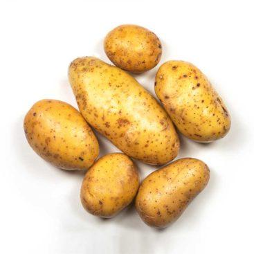 Kartoffel Bernina gewaschen